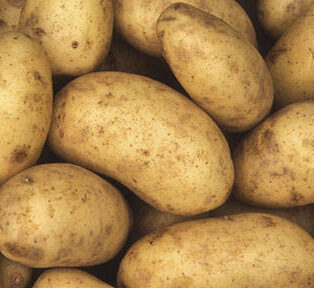 patata quebec